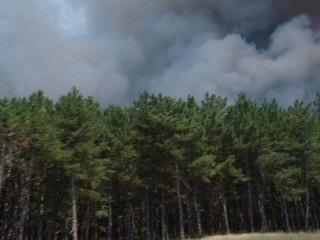 Сверхзвуковые шишки в Херсонских лесах – иностранная провокация?