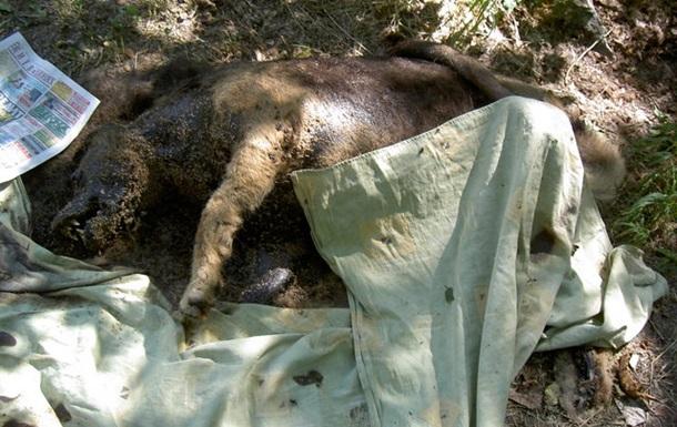 Чи є життя після Євро для безпритульних тварин?