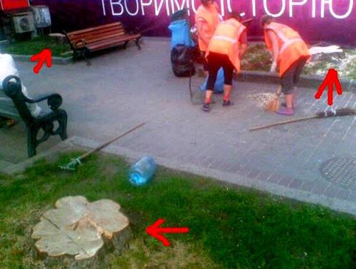 Шевченківська РДА відповіла хто зрізав липи та каштани на Хрещатику.