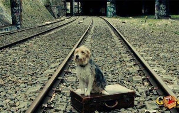 Жан Поль Бельмондо і Його Собака