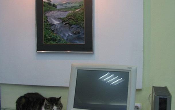 Funny cats. Забавные и смешные коты Харькова