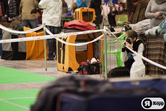 Международная выставка собак в Киее