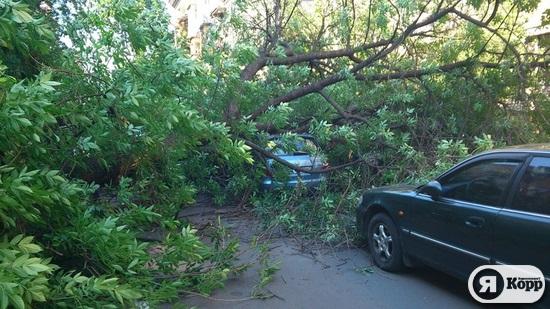 В центре Киева на припаркованные машины упало дерево