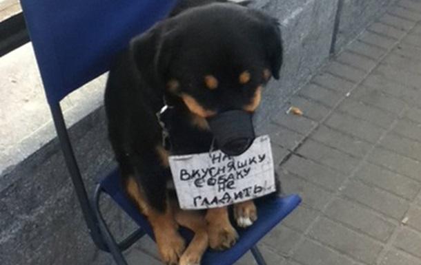 Жестокое обращение со щенком у метро ВДНХ