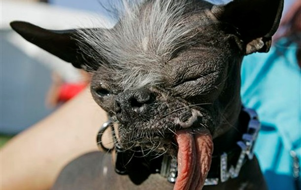 В США скончался самый уродливый пес в мире