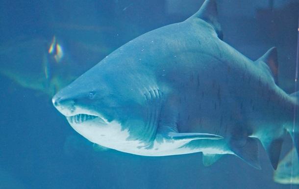 Обнаружено генетическое сходство между человеком и акулой