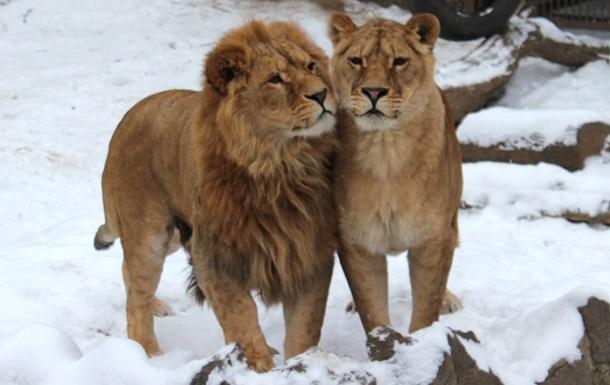 Зимой билеты в Харьковский зоопарк станут вдвое дешевле