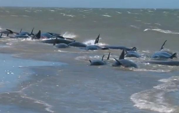 Около 40 дельфинов выбросило на берег в Новой Зеландии