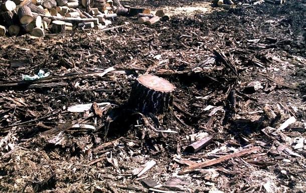 В Киеве прокуратура открыла уголовное производство по факту незаконной вырубки деревьев на Теремках