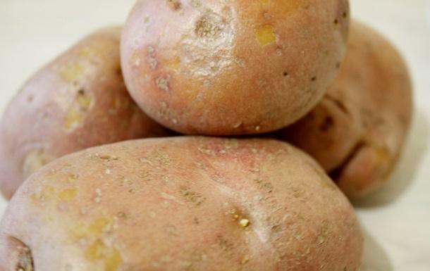 Россия попросила. Беларусь запретила ввоз европейского картофеля