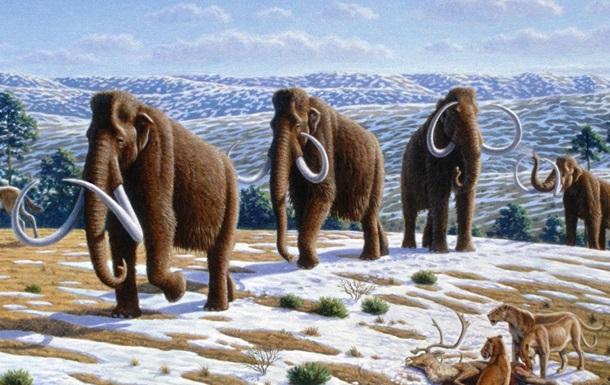 Стало известно, от чего вымерли мамонты