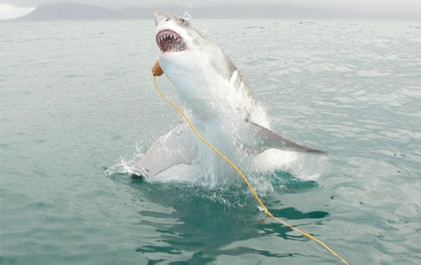 Австралійця оштрафували за вбивство акули-людожера