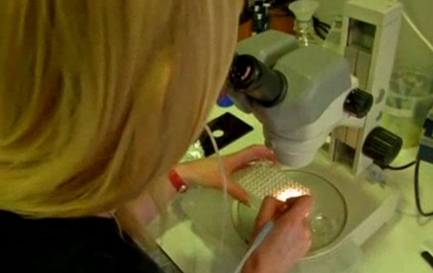 Ученым впервые удалось заснять момент внутриутробной имплантации эмбриона