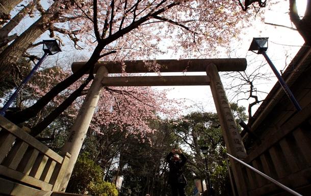 У Японії почалося цвітіння сакури