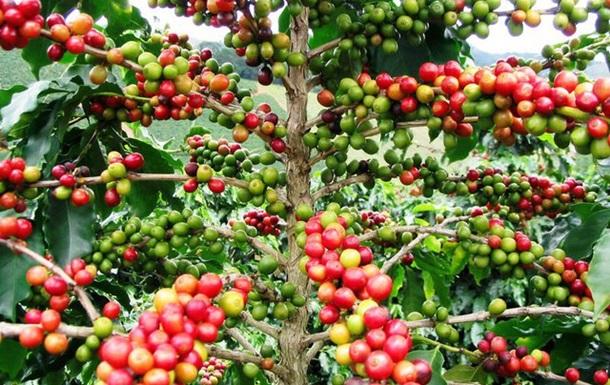 Зеленый кофе для похудения купить у нас!