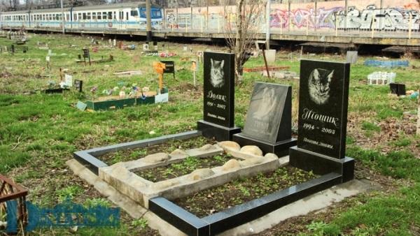15 трупів безпритульних тварин знайшли в Шевченківському районі Києва 16 серпня