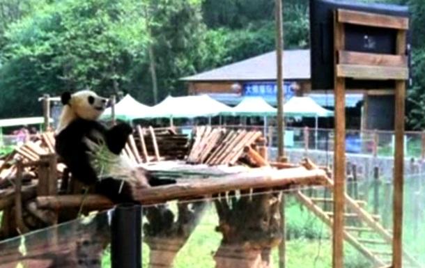 В китайском зоопарке одинокой панде подарили телевизор