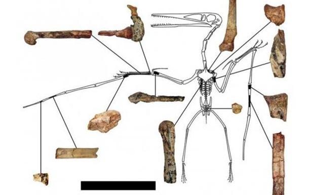 Палеонтологи нашли в Китае криптодракона