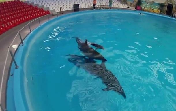 В Донецком дельфинарии родился дельфиненок Мир