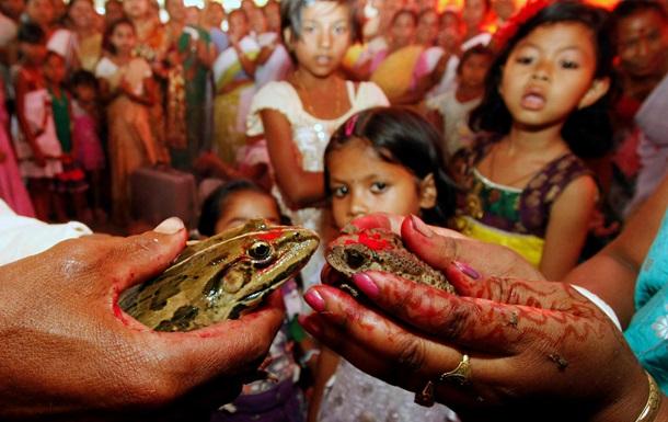 В Индии нашли 14 видов  танцующих лягушек