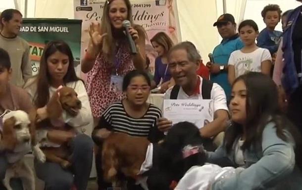 В Перу состоялось сразу несколько  собачьих свадеб