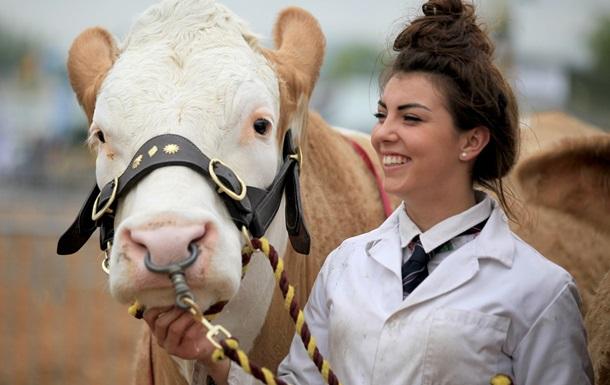 Королевский скот. В Англии открылась старейшая сельхозвыставка Royal Show