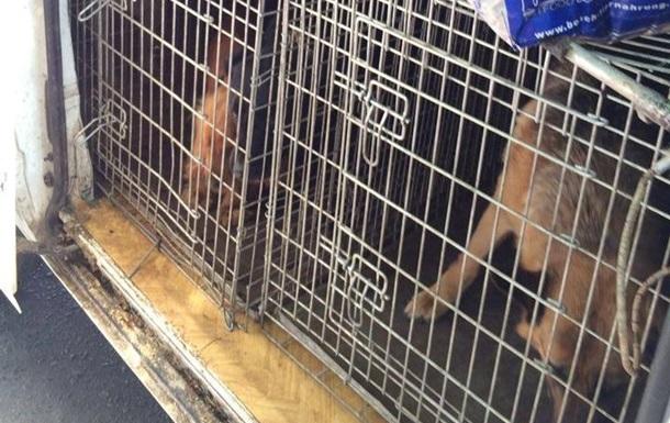 Из аэропорта Донецка освободили служебных собак