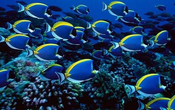 У рыб есть интеллект, они чувствуют боль так же, как человек - ученые