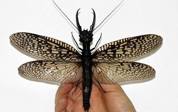 В Китае обнаружили новый вид  огромных насекомых