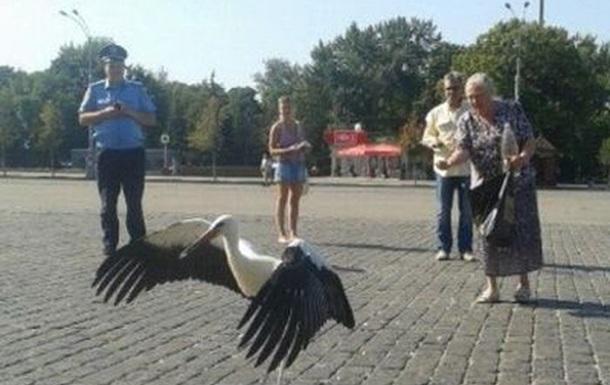 По центру Харькова разгуливают аисты