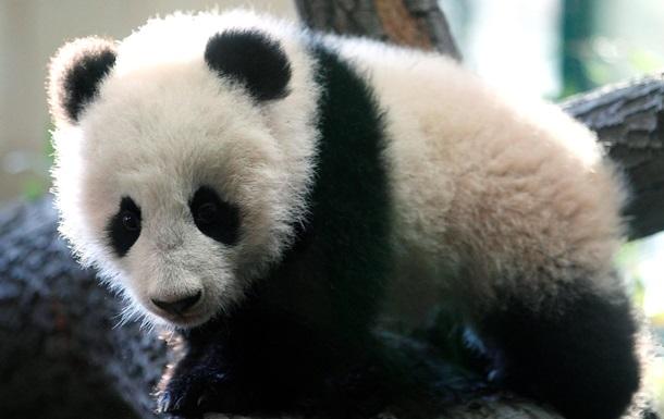 Госдеп США поздравил с днем рождения панду