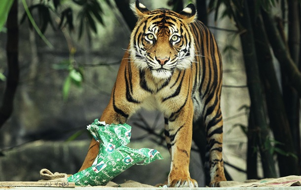 Почему с Земли исчезают дикие животные - репортаж