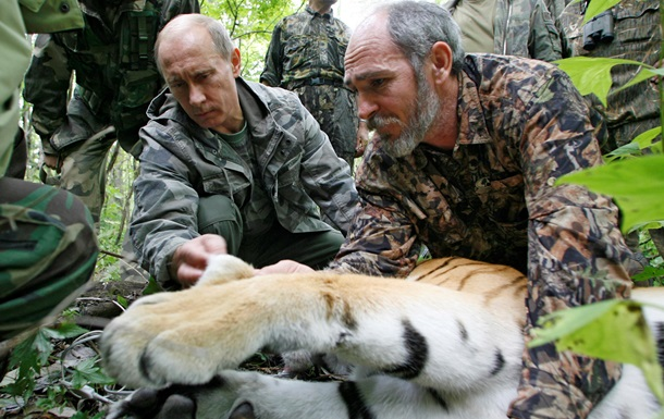 Тигр Путина сбежал в Китай  из-за бродячего характера
