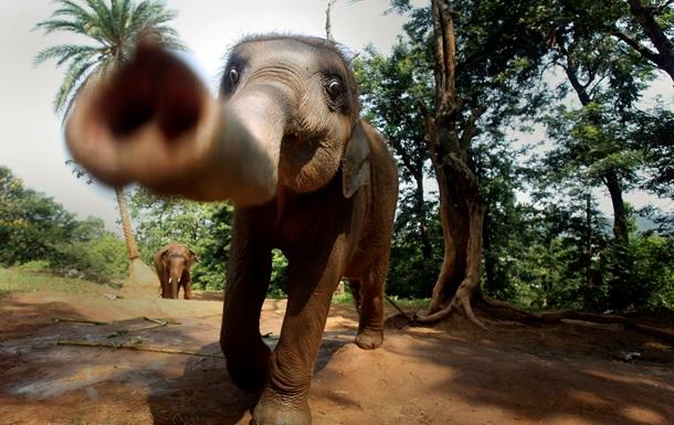 Слон  похитил  россиянок и увез их в джунгли в Таиланде