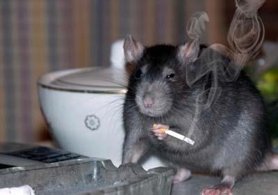 Пришло время избавиться от крысиного мировоззрения