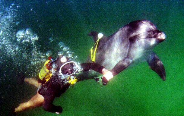 Минобороны РФ провело учения с украинскими боевыми дельфинами в Крыму - СМИ