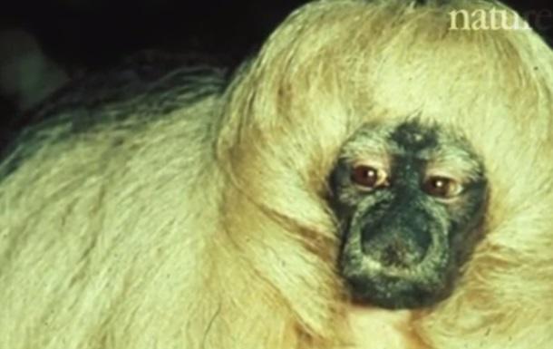 Самые милые животные в науке по версии The Verge