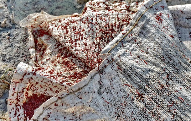 На херсонщине живые биоресурсы уничтожают на миллиарды гривен