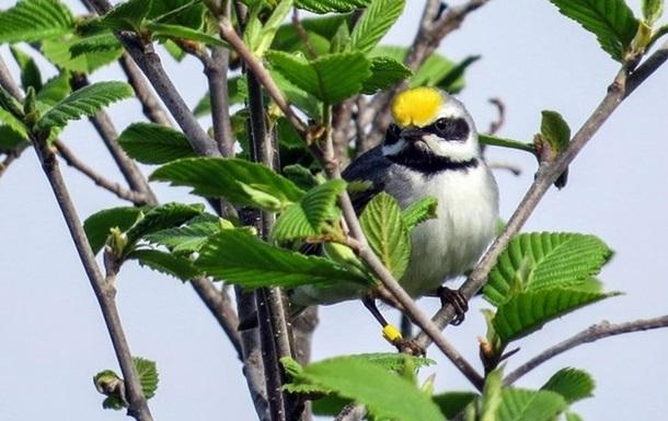 Вчені розповіли, як птахи передчувають негоду