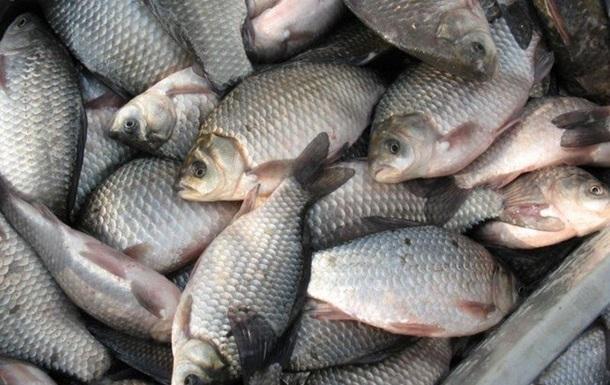 В Днепре и водохранилищах запретили вылавливать рыбу