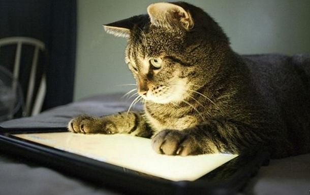 Котопланшет. Почему животные так любят сенсорные экраны
