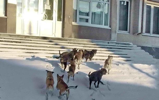 В Херсоне вспомнили, что собаки летали в Космос, и решили...