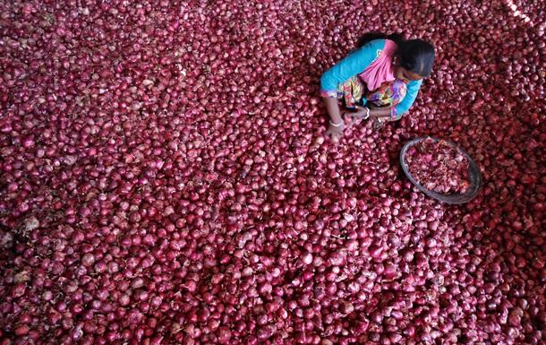 Самый популярный овощ: интересные факты о луке