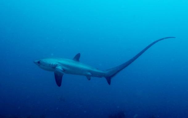 Ученым впервые удалось сфотографировать роды акулы в океане
