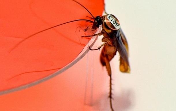 Ученые заявили о существовании  тараканьей личности
