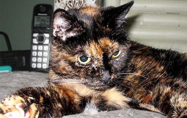 Книга рекордов Гиннесса определила старейшую кошку