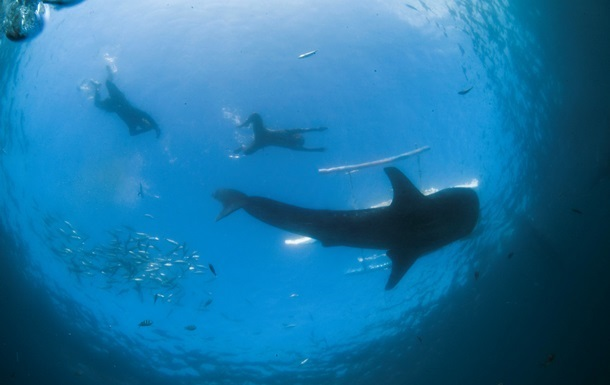 Акула съела немца в Египте