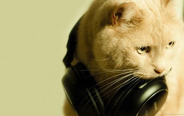 Вчені з ясували вплив музики AC/DC на котів