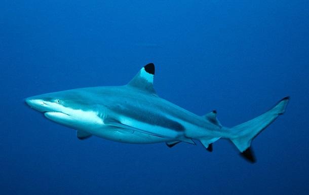 У Росії акула померла від нервового зриву