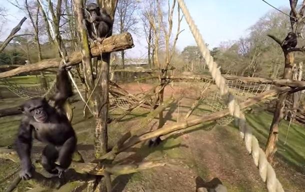 Мавпи навчилися збивати безпілотники